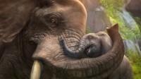 Zoo Tycoon (X360)